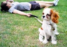 Hond in park stock afbeeldingen