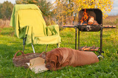 Hond Picnicing stock foto's