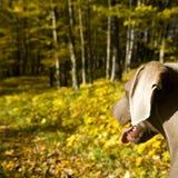 Hond in platteland stock foto's