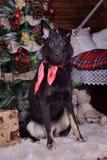 Hond pooch met een rode sjaal rond zijn hals op Kerstmis backgr stock afbeelding