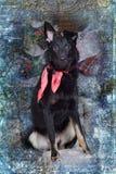 Hond pooch met een rode sjaal rond zijn hals op Kerstmis backgr royalty-vrije stock fotografie