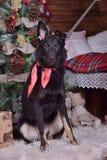 Hond pooch met een rode sjaal rond zijn hals op Kerstmis backgr royalty-vrije stock foto's