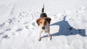 Hond pooch op de sneeuw stock afbeelding