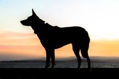 Hond in Profiel Royalty-vrije Stock Afbeeldingen