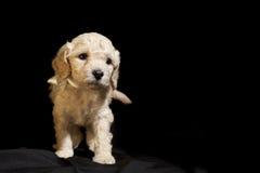 Hond puppie stock afbeelding
