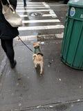 Hond in regentoestel stock foto
