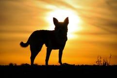 Hond` s Silhouet royalty-vrije stock afbeeldingen