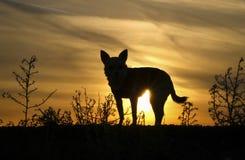 Hond` s Silhouet royalty-vrije stock afbeelding