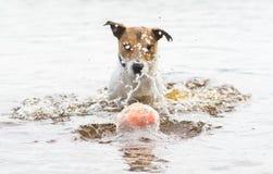 Hond` s stuk speelgoed bal binnen waterbel die in water met plonsen duiken stock foto's