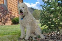 Hond in schaduw Stock Foto
