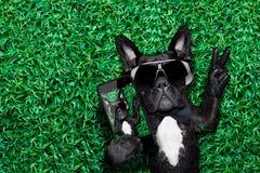 Hond selfie royalty-vrije stock foto