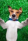 Hond selfie Royalty-vrije Stock Afbeeldingen