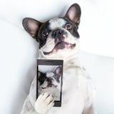 Hond selfie royalty-vrije stock fotografie