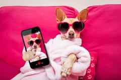 Hond selfie wellness spa Stock Foto's