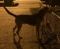 Hond in silouette Stock Afbeelding