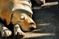 Hond, Slaap, Achter, Dierlijke, Dierlijke Rug royalty-vrije stock afbeelding