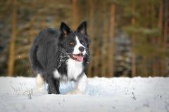 Hond in sneeuw royalty-vrije stock foto