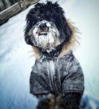 Hond in sneeuw wordt behandeld die Royalty-vrije Stock Afbeelding