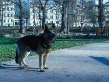 Hond in stadspark Royalty-vrije Stock Afbeeldingen