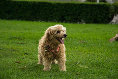 Hond status Stock Foto's