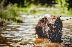 Hond takug een de zomerbad Stock Afbeeldingen
