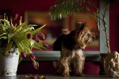 Hond thuis royalty-vrije stock afbeelding