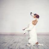 Hond thuis stock fotografie