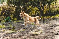 Hond tijdens de vlucht Stock Afbeeldingen