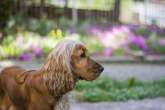 Hond in tuin Stock Afbeeldingen