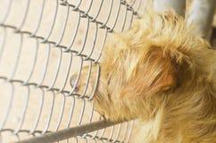 Hond twee Royalty-vrije Stock Afbeeldingen