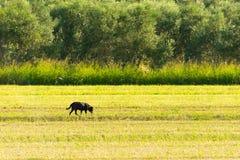 Hond uit in de aard Een landelijk landschap Royalty-vrije Stock Fotografie