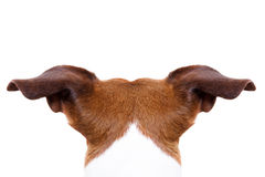 Hond van achter rug stock afbeeldingen