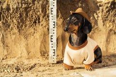 Hond van het ras van tekkel, zwarte en tan, in de kleren van een archeoloog en een hoed op archeologische uitgravingen tegen stock foto