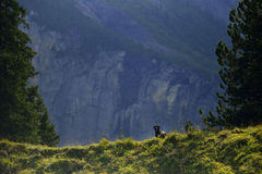 Hond van kraai de Roemeense shepard in Kandersteg-bergen zwitserland stock afbeeldingen
