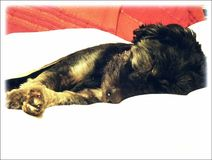 Hond Vito Royalty-vrije Stock Foto