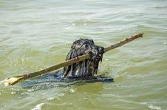 Hond in water Royalty-vrije Stock Fotografie