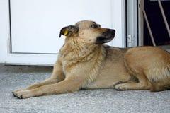 Hond welkom huis op bruin mat grappig huis stock fotografie