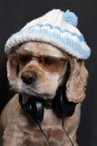 Hond in witte hoed Royalty-vrije Stock Foto's