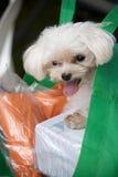 Hond in zak stock afbeeldingen