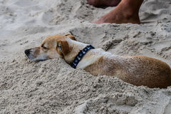 Hond in zand op strand Royalty-vrije Stock Afbeelding