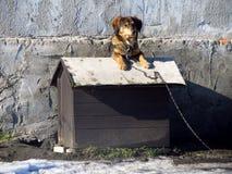 Hond in zijn kennel stock afbeeldingen