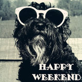 Hond in zonnebril met tekst: Gelukkig weekend Royalty-vrije Stock Foto's