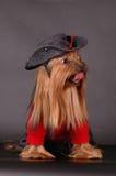 Hond in zwarte hoedenzitting Stock Foto's