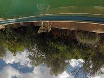 Hondbezinning terwijl wijd status dichtbij een pool stock foto's