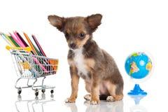 Hondbol op witte achtergrond wordt geïsoleerd die Royalty-vrije Stock Fotografie