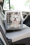 Hondbrandkast in de auto Stock Afbeeldingen