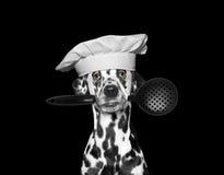 Hondchef-kok die een lepel in zijn mond houden stock fotografie