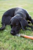 Honddagen van de zomer royalty-vrije stock afbeeldingen
