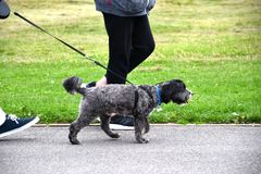 Hondeigenaars hun lopen graaft Royalty-vrije Stock Foto's
