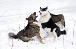 Honden. royalty-vrije stock afbeelding